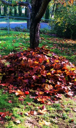 leaf-pile-2
